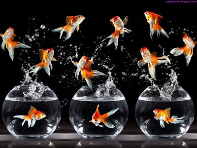Fish Standard Resolution Wallpaper 5