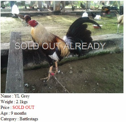 YL Grey SOLD OUT