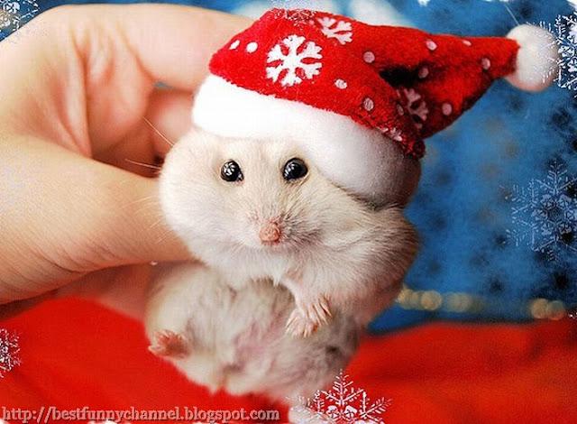 Cool Christmas Hamster