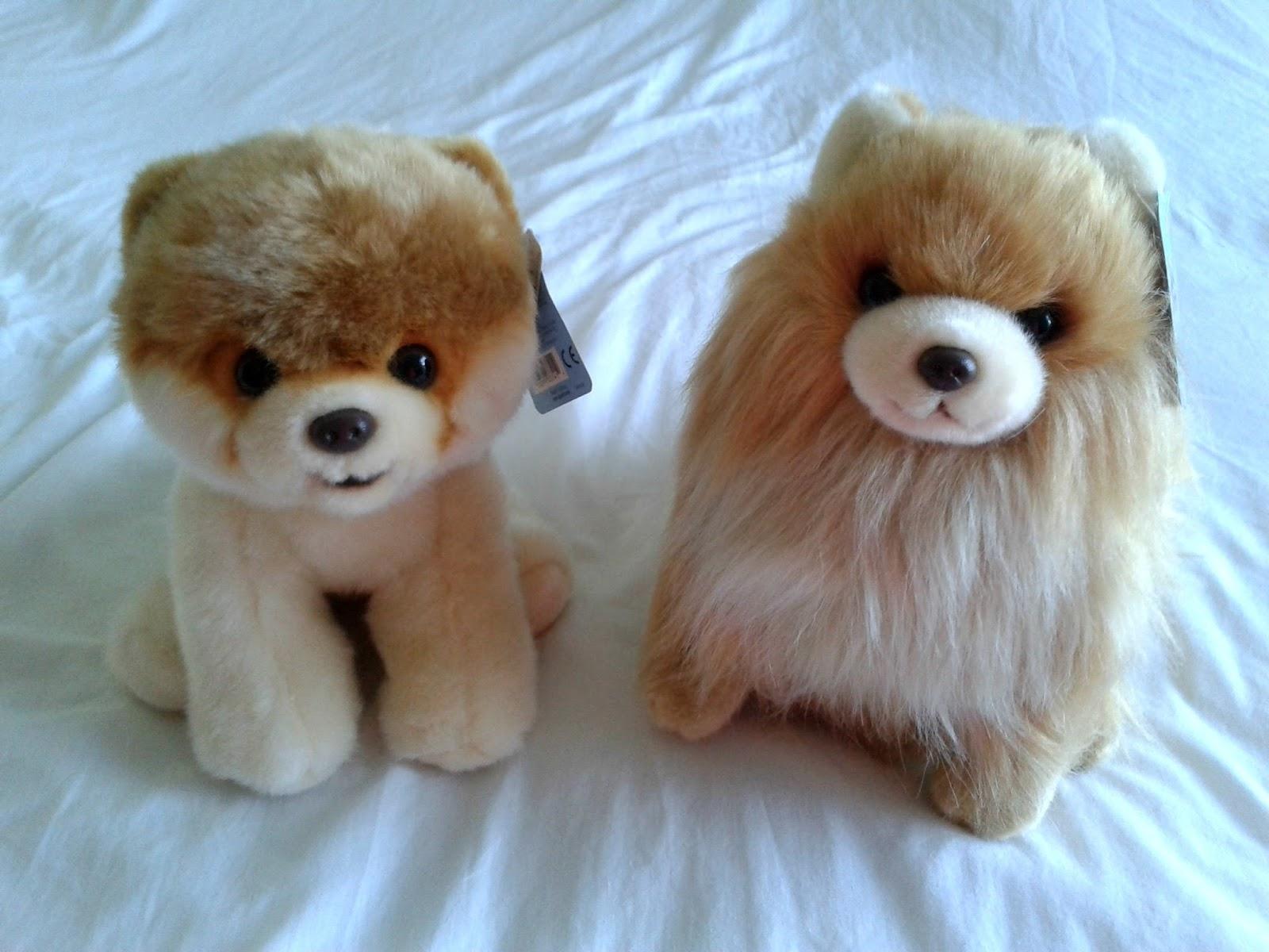 Boo The World's Cutest Dog Haul Buddy Dog