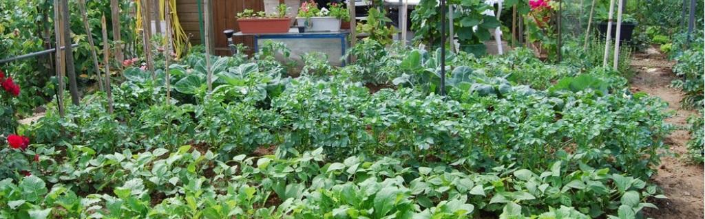 A-Hubgjardineur : Produire ses légumes