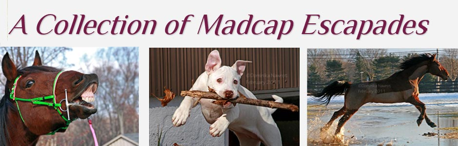 A Collection of Madcap Escapades