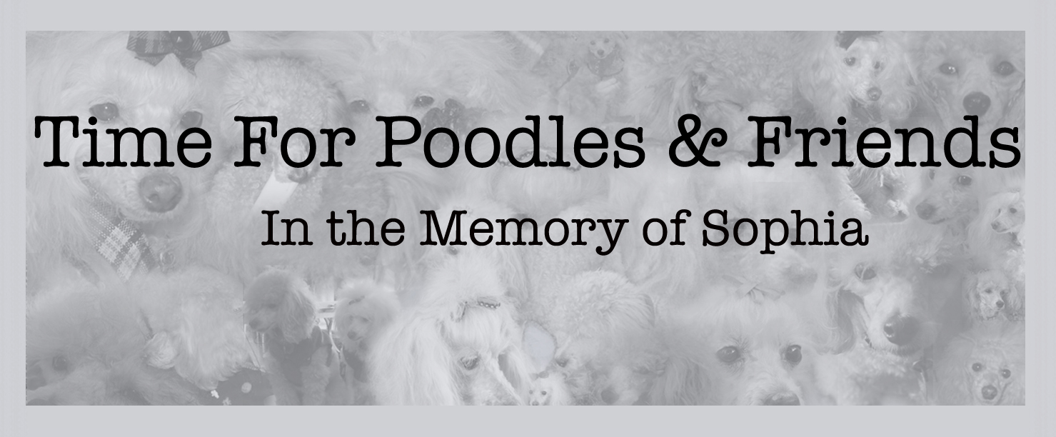 Time For Poodles And Friends