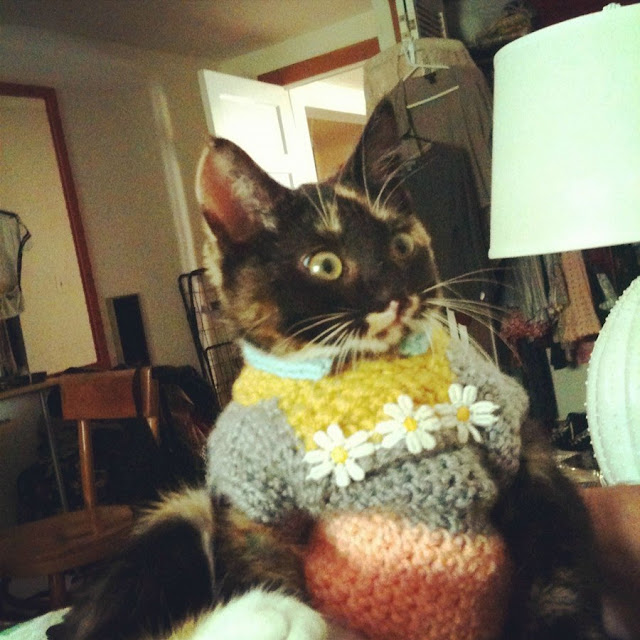 funny cat pictures, cat on sweater