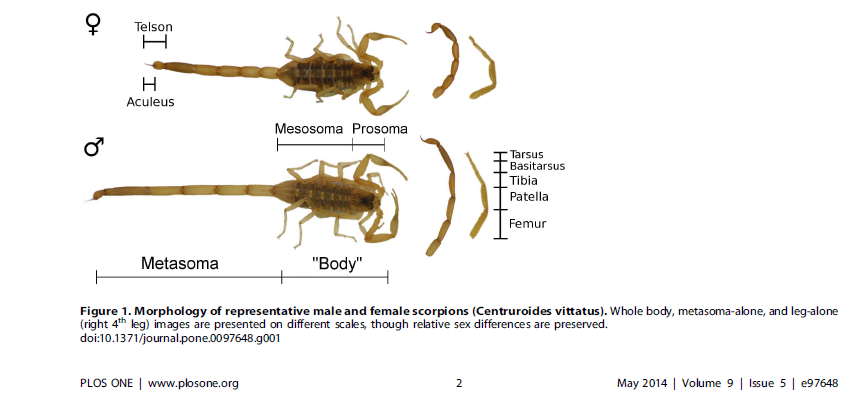 Sexual preditor map