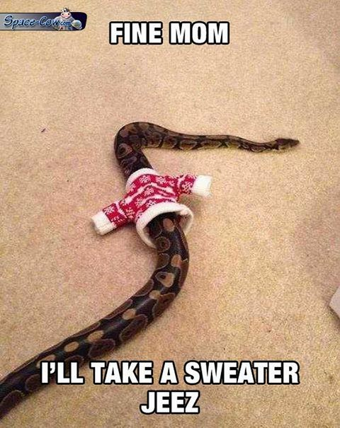funny snake picture humor