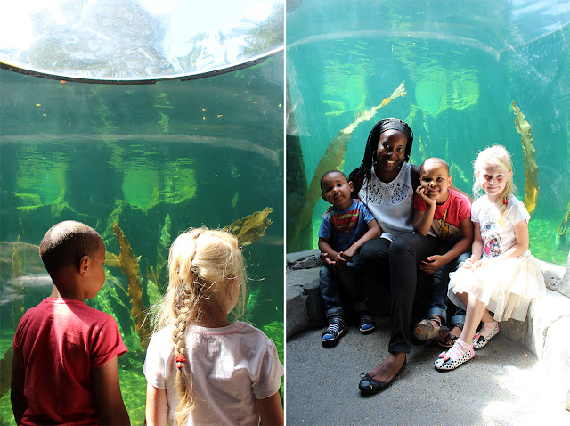 underwater-aquarium-sealife-weymouth-kids-family-fun-todaymyway.com