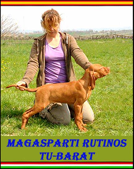Mejor Baby Exposición Especial Vizsla Club Hungría World Dog Show 2013
