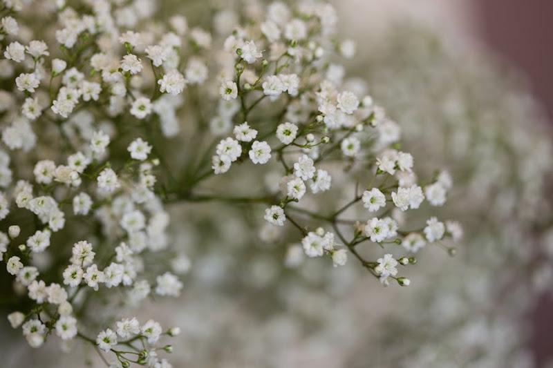Kwiaciarnia Molucella