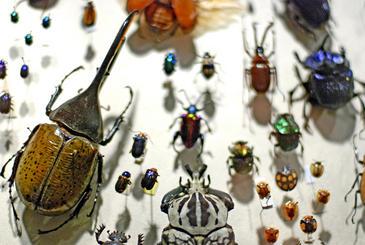 hechos y fenomenos:israel Mas-del-60-de-las-nuevas-especies-en-Europa-son-descritas-por-taxonomos-aficionados_image365_