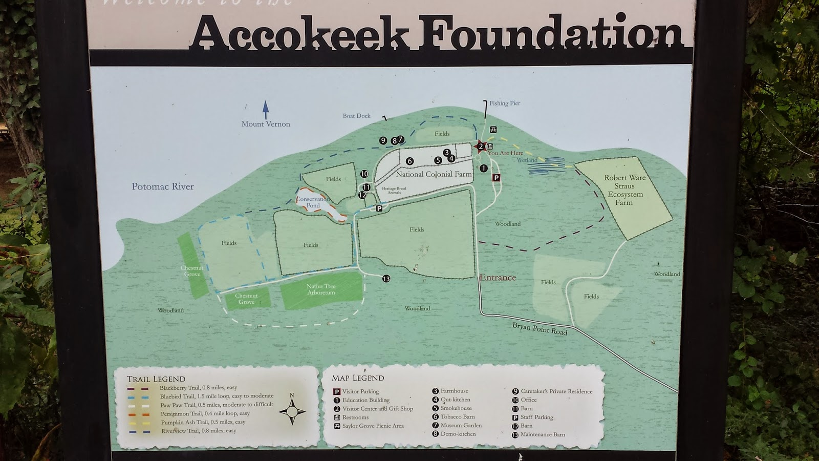 the accokeek foundation preserves the shoreline this location is directly across the potomac river from mount vernon the foundation established in 1954