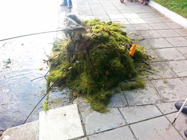 """Καστοριά: """"Αφού δεν ασχολείται ο Δήμος …"""" (φωτογραφίες)"""
