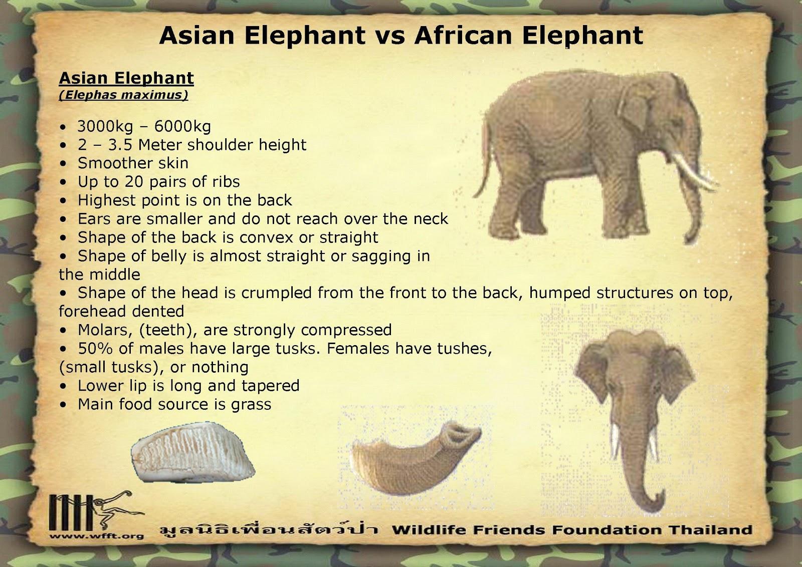 beautiful animals safaris elephant animal safaris