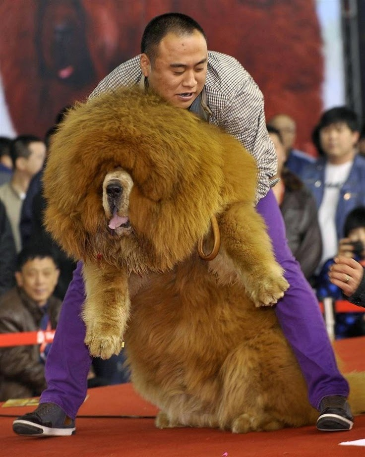 See more Beautiful Big dog http://cutepuppyanddog.blogspot.com/