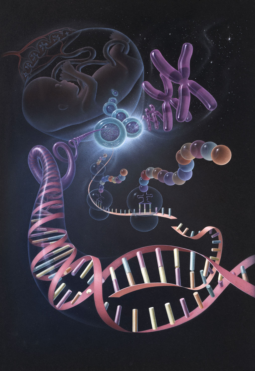 an analysis of the human genome project deciphering the code of life Human genome project - genome essay example some benefits that accrue with human genome understanding are, accurate and faster the analysis of the gene information is not easy with the use of the ordinary computers.