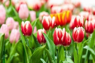 Frühlingsdiät