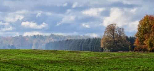 autumn trees in haze
