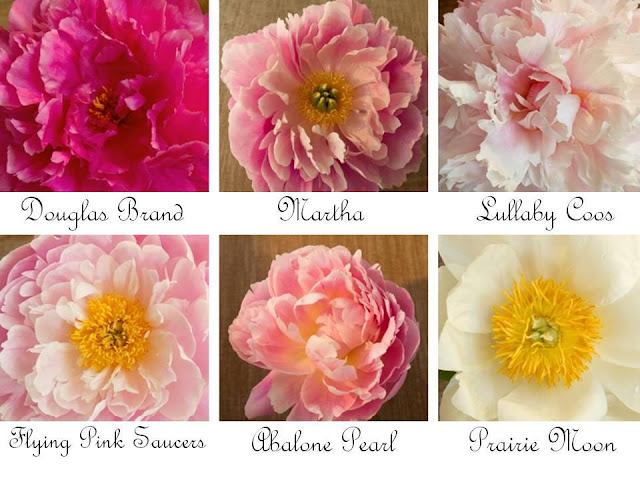 Types of Peony Flower