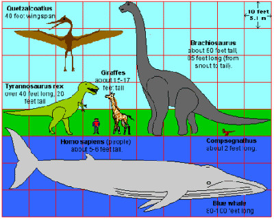 hewan terbesar paus biru