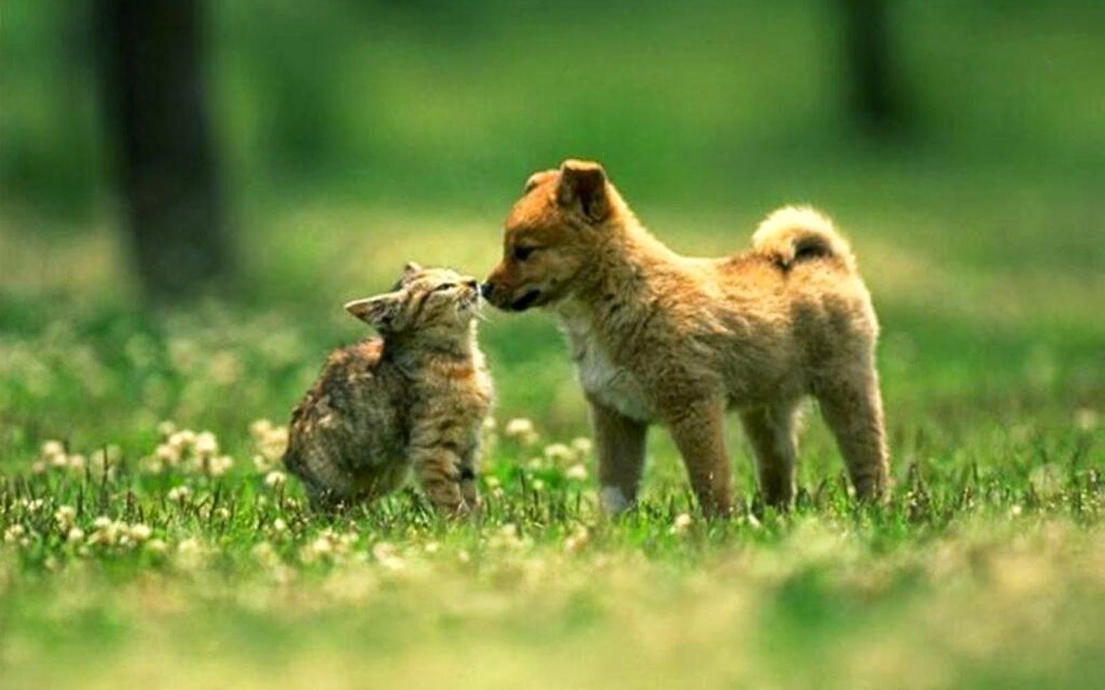<b>Cat Dog</b> Cute Animal Background HD <b>Wallpaper</b> - Cutest Paw
