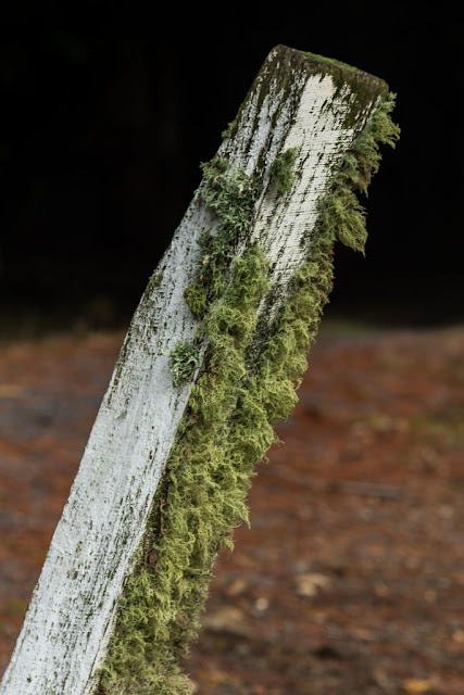 moss on wooden post