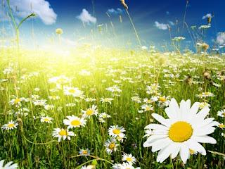 Какая погода будет летом 2012