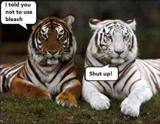 30 Funny animal captions - part 14 (30 pics) | Amazing ...
