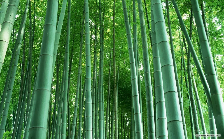 Bamboo forest hd desktop wallpaper beautiful desktop for Bamboo wallpaper