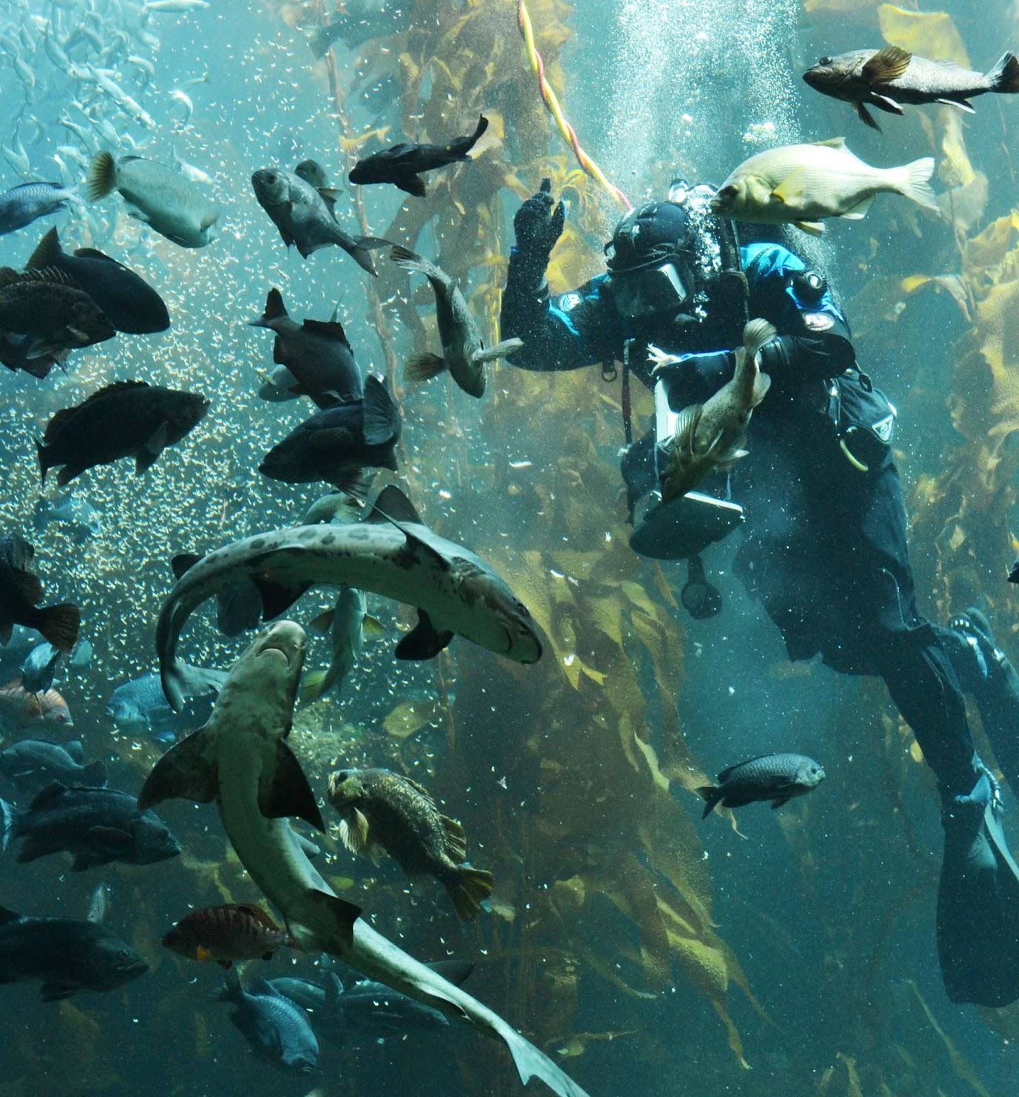Polkadots On Parade Monterey Bay Aquarium