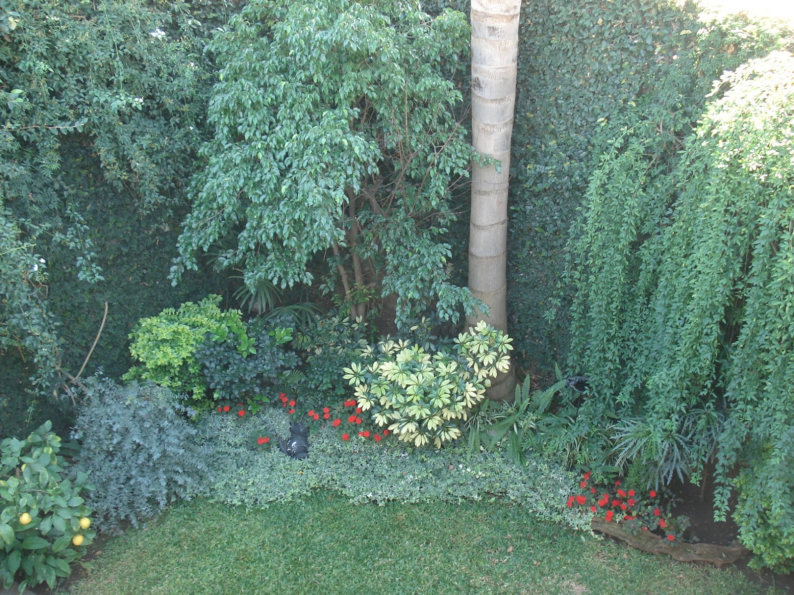 Reverdir jardineria y paisajismo follajes de color for Arboles jardin sombra