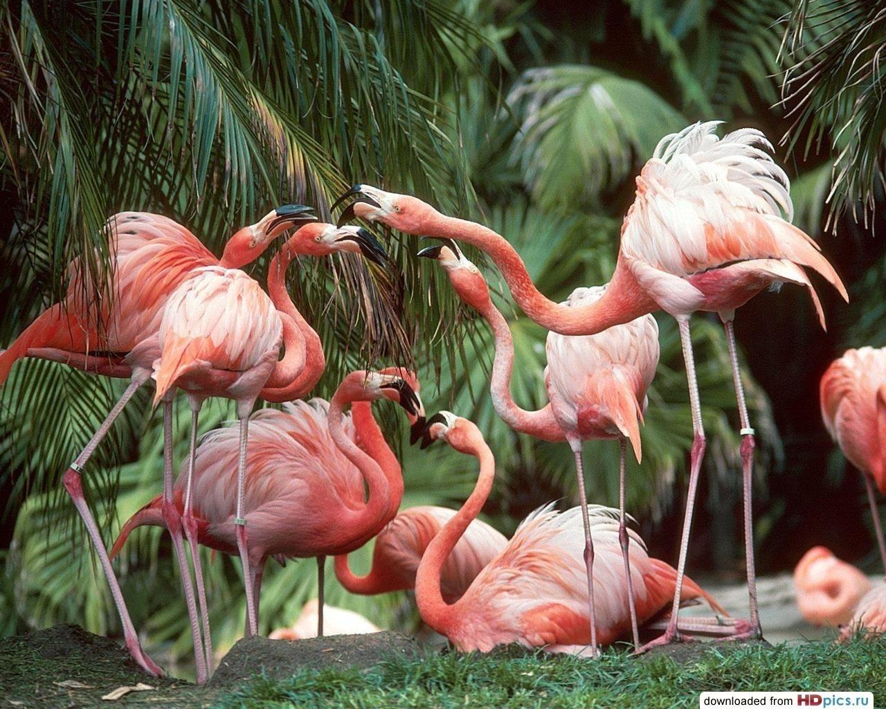 Птицы высокого разрешения для