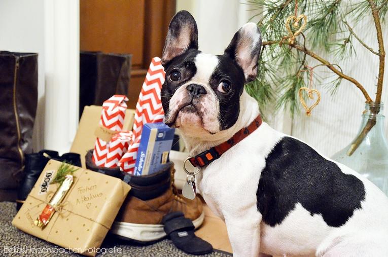 Blog Dekoration Weihnachten Einrichtung Hund