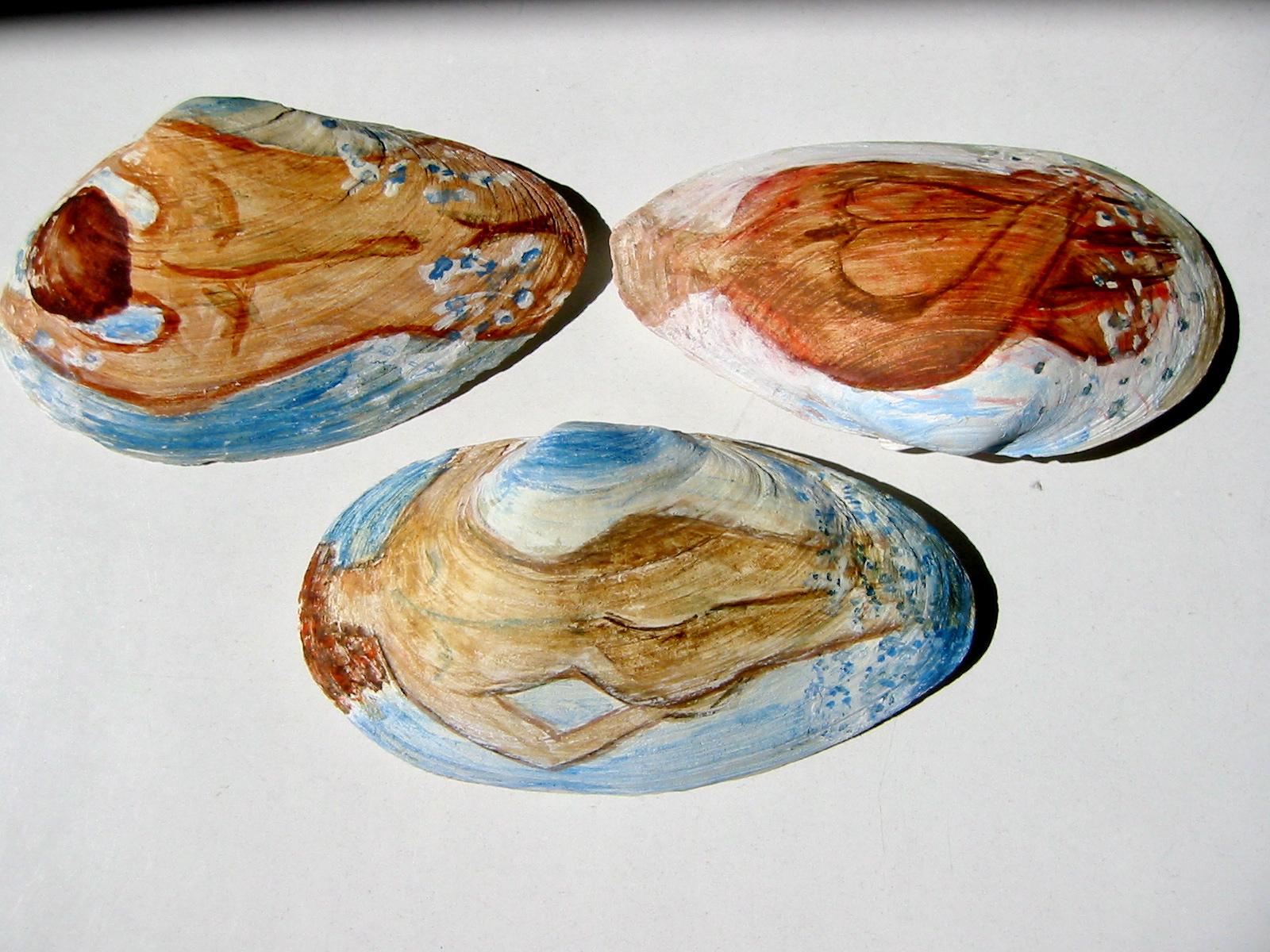 Muschelbilder