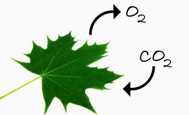 Tabla periodica de los elementos oxigeno o el oxgeno es un elemento qumico importante que es incoloro inodoro e inspido si alguna vez te has preguntado para qu sirve el oxgeno a continuacin urtaz Images