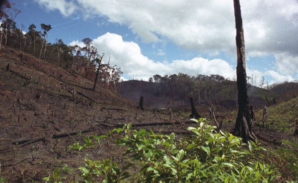 an analysis of the rainforest deforestation and the question on the humans involvement Deforestation is the permanent destruction of forests in order to make the land available for other uses an estimated 18 million acres (73 million hectares) of forest, which is roughly the size.