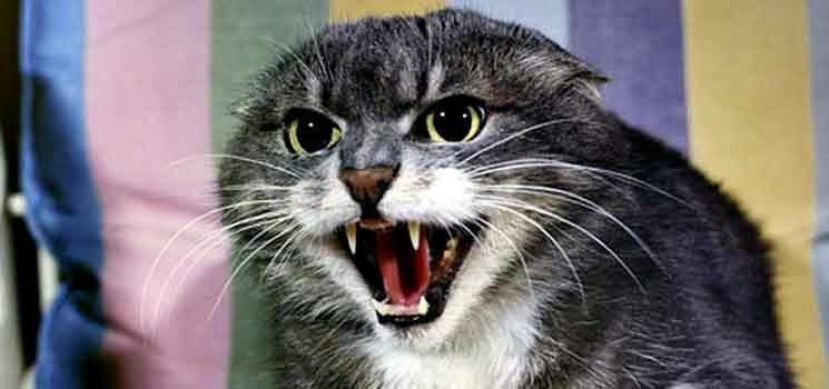 Kucing terlalu liar dan marah