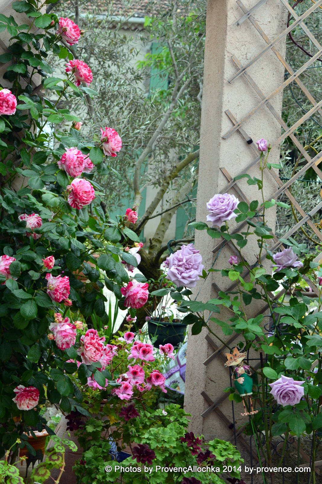 jardin des roses