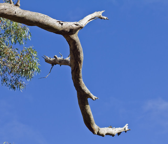 tree branch at werribee gorge park