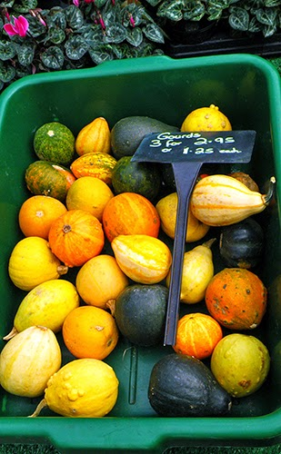 Assorted Gourds in Tray