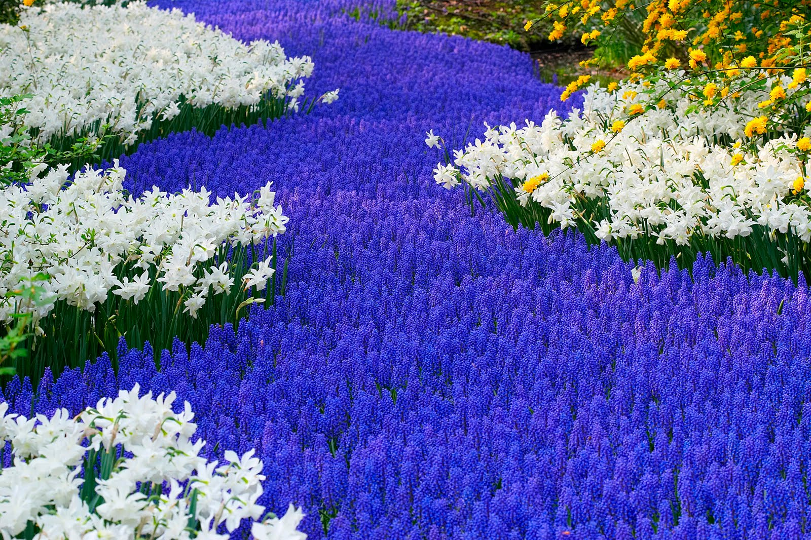 Beautiful flower garden flower forest cool wallpapers wonderful
