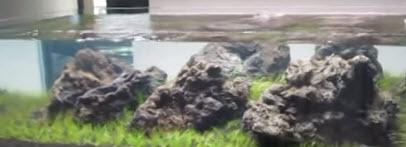 Bố cục thủy sinh dùng đá nham thạch to