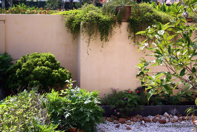 wall planting flower bed