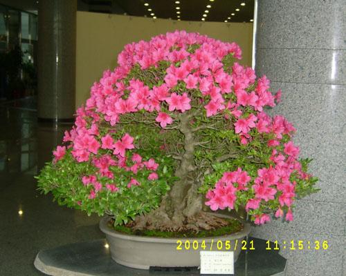 Small but terrible bonsai for Unusual bonsai creations