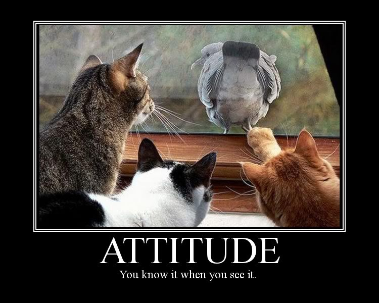 kylie griffin s blog cat urday   cats with attitude again