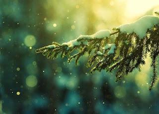 Winter in green
