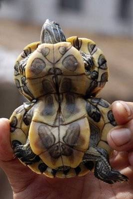 World Stangest Deformed Animals Weird But True Most