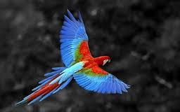 Sattanic bird