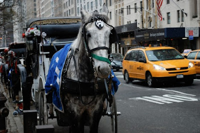 Horse carriages lineup on Central Park South, in New York City
