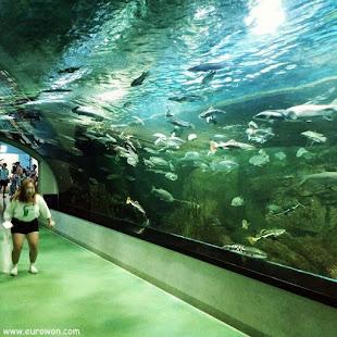 Túnel bajo gran acuario coreano