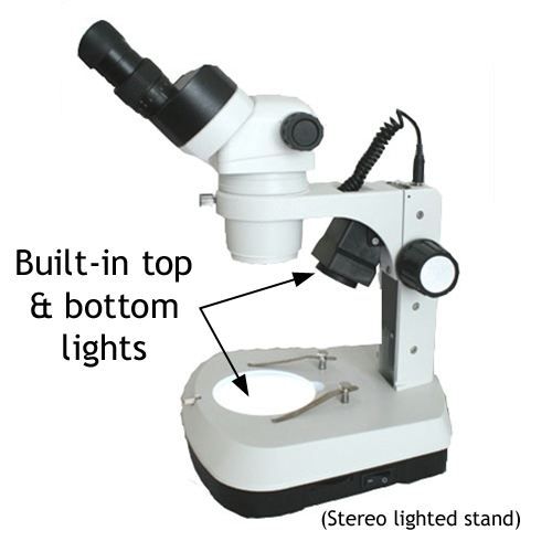 Labelled diagram of a stereo microscope simple electronic microscope world blog 2015 rh blog microscopeworld com blank microscope diagram microscope diagram worksheet ccuart Choice Image